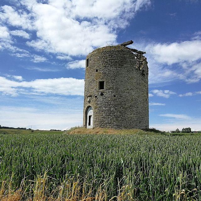 Le Moulin l'Abbé trône au milieu des champs, sur la commune de Saint-Martin-Boulogne, visible à des kilomètres à la ronde ! 👀 L'avez-vous déjà remarqué ?  #autopcotedopale #saintmartinboulogne #randonnée #balade #campagne #sentierdumoulinlabbe #pasdecalaistourisme #hautsdefrancetourisme #moulin