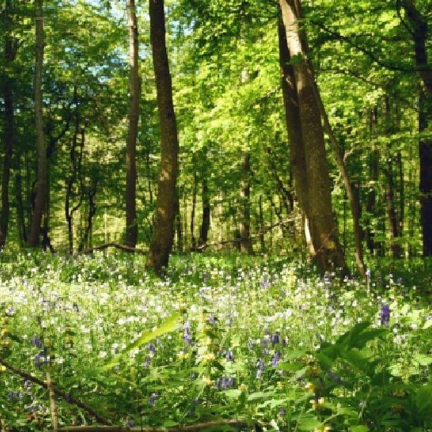 Pour la journée de la Terre 🌍, petit focus sur le @pnrcapsetmaraisdopale , qui participe au projet USAC (UNESCO sites across the Channel). Ce dernier vise à développer un nouveau modèle de tourisme durable, harmonieux et respectueux de l'environnement dans les sites classés UNESCO (ou en passe de l'être) de part et d'autre de la Manche 🏦 17 des 153 communes du parc naturel régional des Caps et Marais d'Opale font partie de l'agglomération boulonnaise ! 🌳 #autopcotedopale #Hardelot #pnr #parcregionaldescapsetmaraisdopale #foret #pasdecalaistourisme #hautsdefrancetourisme #earthday #wanderlust #naturelovers