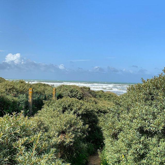 À Hardelot, la mer au bout du chemin #autopcotedopale #boulonnaisautop #seaside #opalcoast #mer #dunes #août #vacances #pasdecalaistourisme