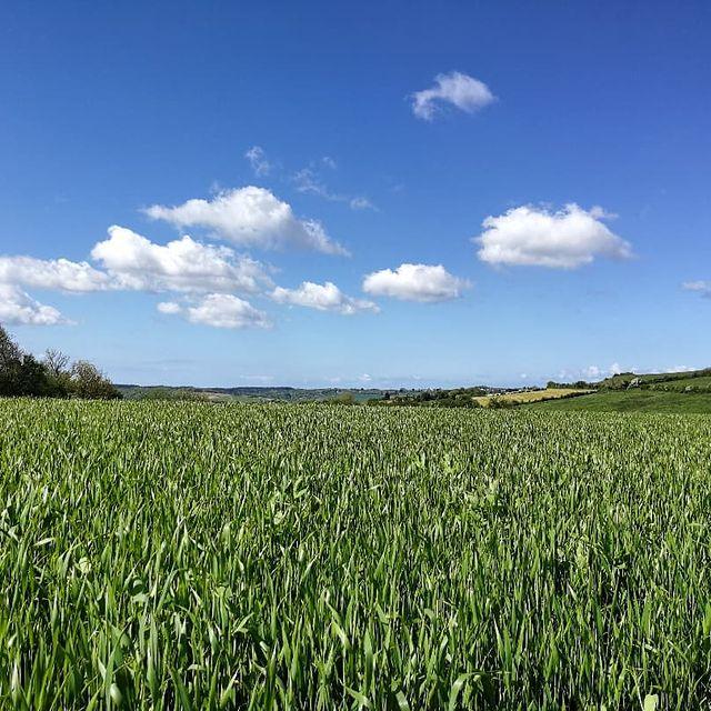 """Quand l'expression """"se mettre au vert"""" prend tout son sens 💚 😍 Entre Hesdigneul-les-Boulogne, Isques et Echinghen, le sentier de Landacres (13,5 kms) offre de jolis points de vue sur la campagne boulonnaise ! 🎒🥾 #autopcotedopale #field #countryside #hiking #hesdigneul #isques #echinghen #randonnée #hautdefrancetourisme #naturelovers #pasdecalaistourisme"""