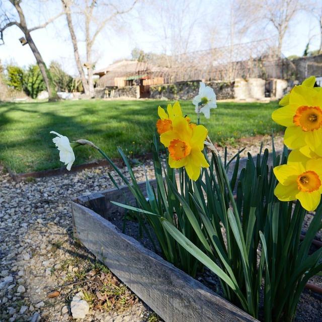 C'était quelques jours avant la vague de froid que nous subissons. Et dans vos jardins, vous avez des dégâts ? Des astuces à partager pour protéger vos plantations de printemps ?