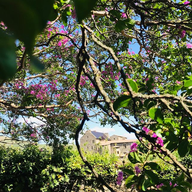 [VIVRE NATURE] 🌿 Chez nous elle est généreuse, espiègle et brute: venez embrasser votre vraie Nature au cœur de #tournonsurrhône 🍃  🌿 Stay with us and embrace your real Nature in the very heart of #tournonsurrhone 🍃  ✅ Contact DreamTeam: 📞 +33 (0)4 7506 9750 💌 contact@hoteldelavilleon.com  Hôtel de la Villeon **** 2 tue Davity 07300 Tournon-sur-Rhône  (Ardèche - 50mn au sud de Lyon)  www.hoteldelavilleon.com  #hoteldelavilleoninstamoments #tournon #ardèche #ardeche #hermitagetournonais #ardechehermitage #auvergnerhonealpestourisme #ardechetourisme #ardechesecrete #hotelenardeche #hoteldeluxe #visitfrance #explorefrance #jardins #jardinsecret #welcome #bienvenue