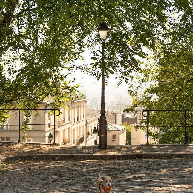 Montmartre 🐶😉