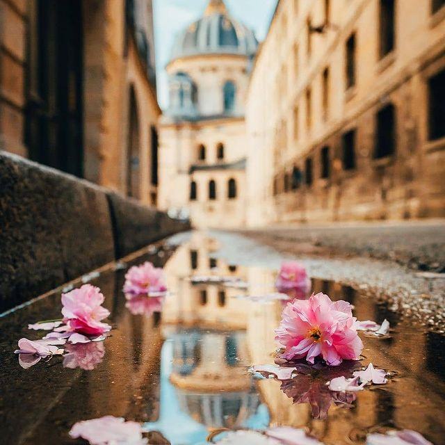 🌸 After the rain 🌸
