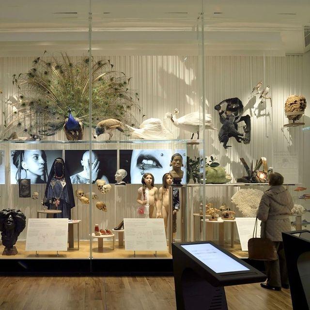 Une visite au Musée de l'Homme s'impose, juste à côté de l'hôtel ! 🎟️ Un merveilleux voyage au cœur des civilisations du monde 🌍  Enjoy a visit to Musée de l'Homme right next to the hotel! 🎟️ A beautiful journey to the heart of world civilizations 🌍 _______________________ 📸@museedelhomme   #plazatoureiffel #hotelplazatoureiffel #boutiquehotel #ruegreuze #luxuryhotel #tasteintravel #beautifulhotels #parismonamour #besthotelsparis #breakinparis