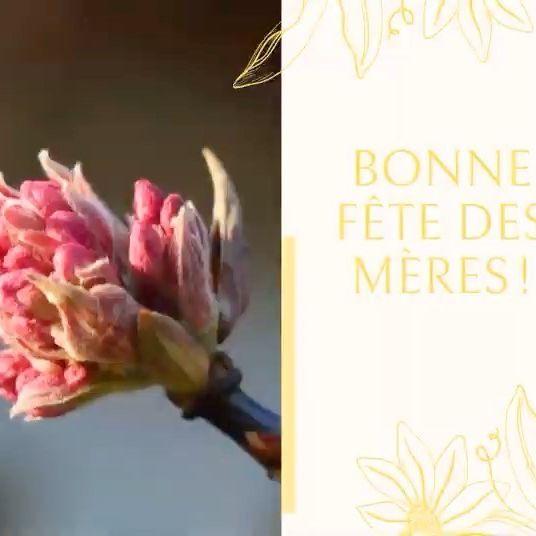 Nous souhaitons une merveilleuse fête des mères 🌹 à toutes les mamans du monde 😘! We wish a wonderful day to all mothers 🌹in the world 😘!