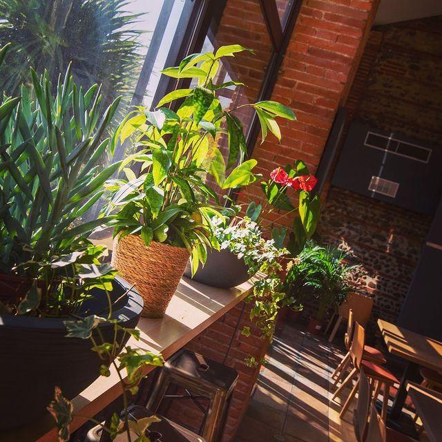 Un rayon de soleil aux Pins Galants ce matin !☀️🤗