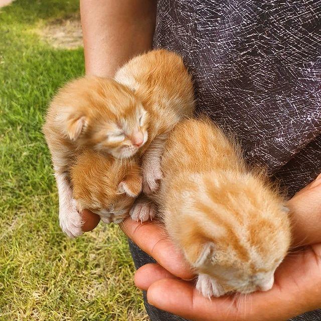 WELCOME TO THE FAMILY🐱 #nouveauxhabitants #machefertgroup #machefertfamilly #murrano #marrakech #kitty #resort #welcometothefamily