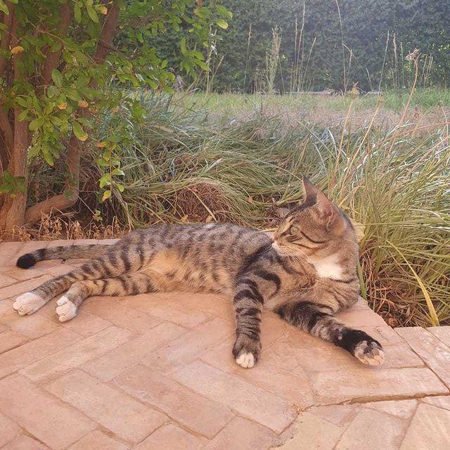 """"""" Le chat est un animal lunaire et, en tant que tel, on lui attribue les propriétés de ... Le chat, en tant que totem, est un fabuleux protecteur et nettoyeur d'énergies """" 🧿 #marrakech #resort #machefertgroup #murano #muranomarrakech #catslover #cat"""